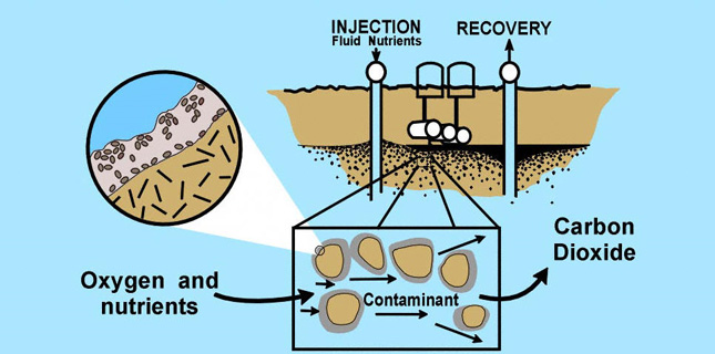 The cycle of Bioremediation