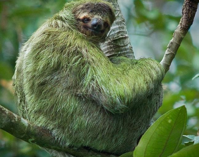sloth-02