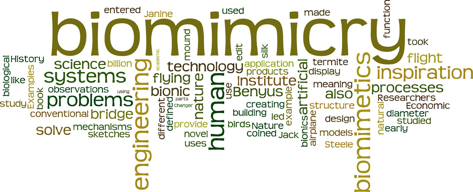 wordle-biom4